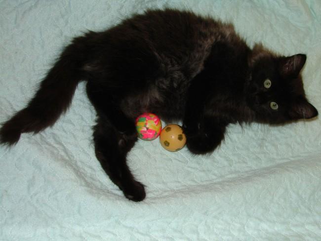 играющий с шариками кот