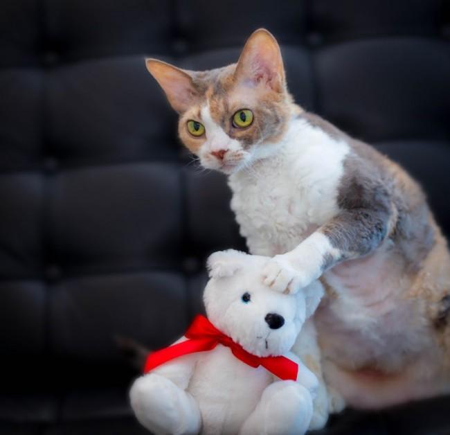 Кот с мягкой игрушкой в лапах