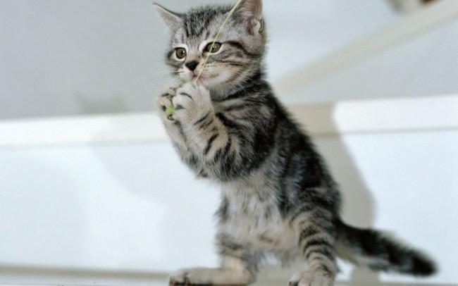 кот играет с катушкой ниток